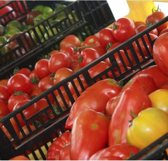 Mhmmm… les bonnes tomates!