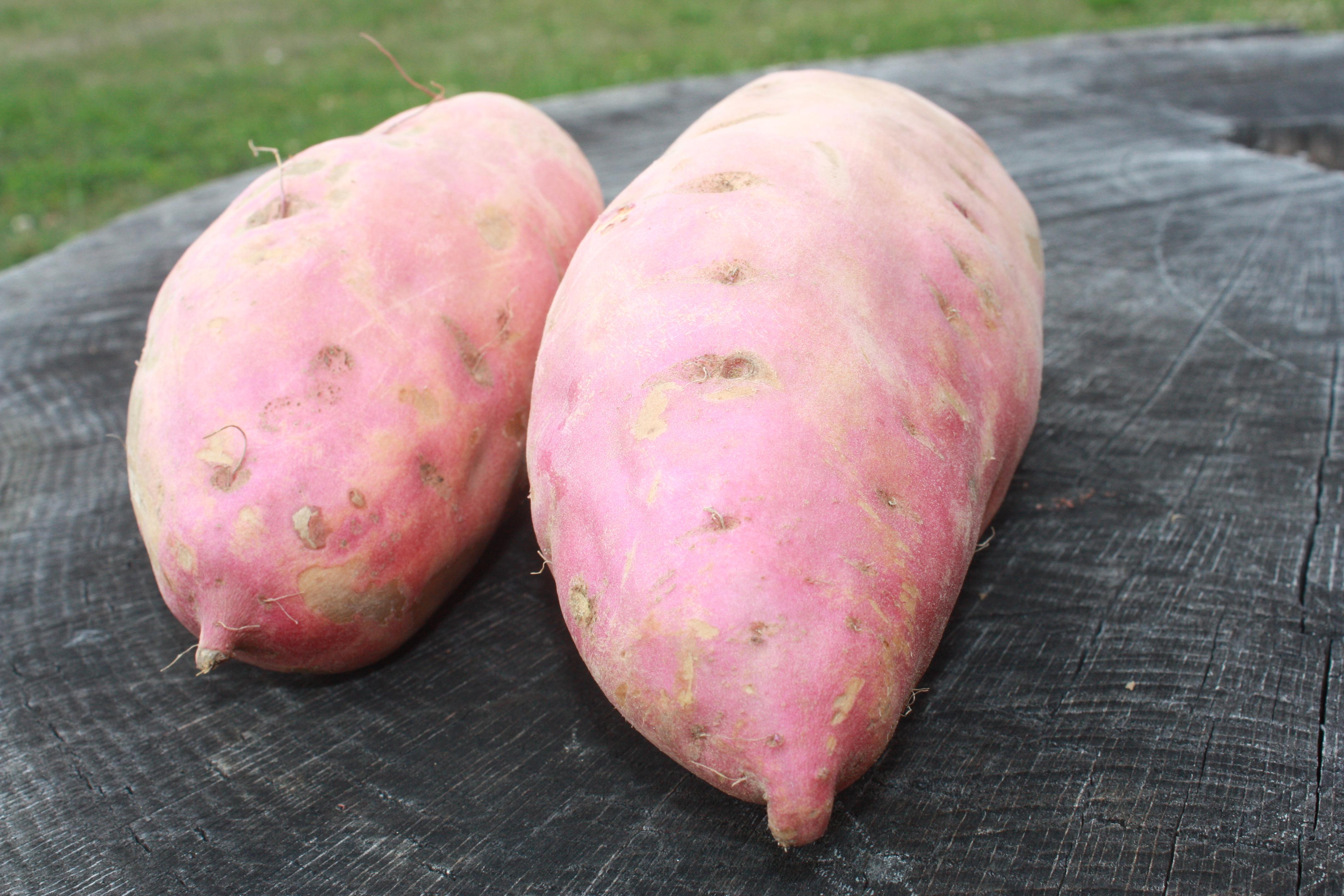 La patate douce, star de l'hiver!