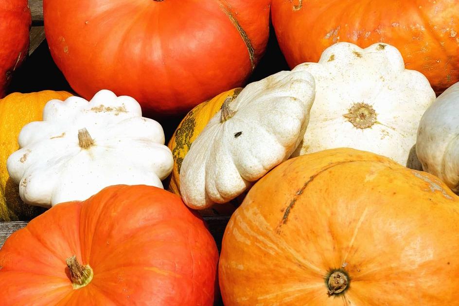 A vous les légumes d'automne…