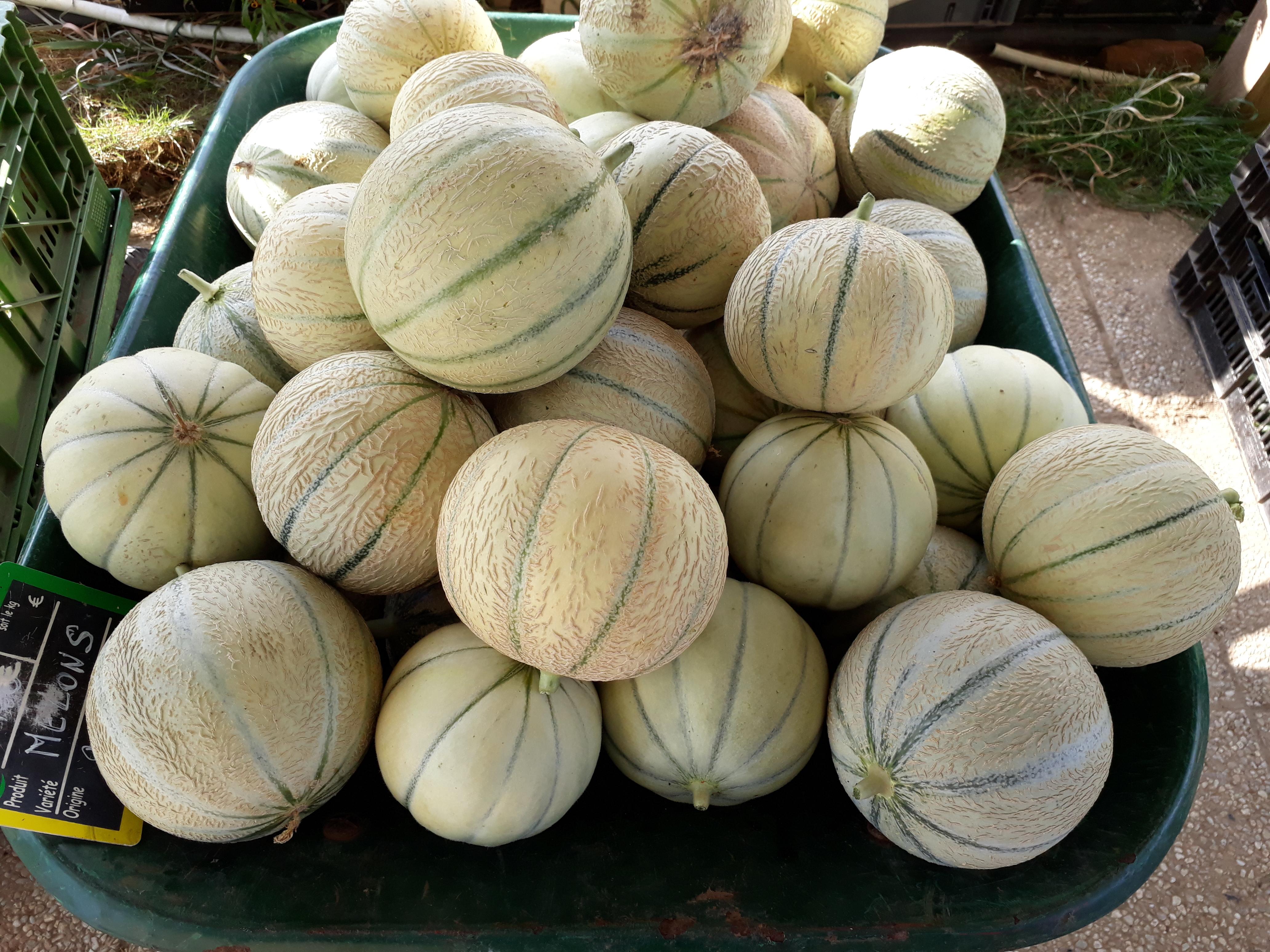 C'est la saison des melons!!!